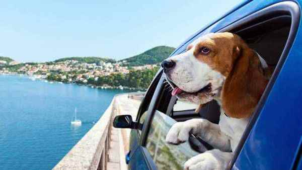 Picture for category Dog Outdoor / Travel
