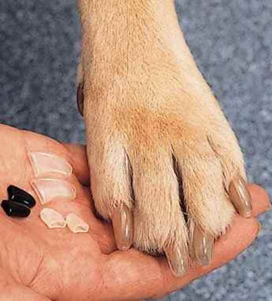 Picture for category Dog Soft Claws