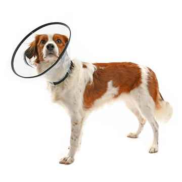 Picture of BUSTER COMFORT COLLAR w/Soft Rubber Edge(273904) - 20cm