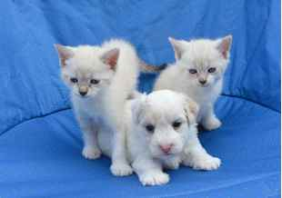 Picture for category New Puppy or Kitten