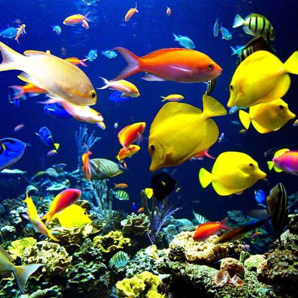 Picture for category Aquatic