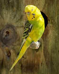 Picture for category Avian Diets and Accessories