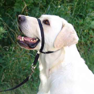 Picture of GENTLE LEADER/ADJUSTABLE HEADCOLLAR -MED/BLACK