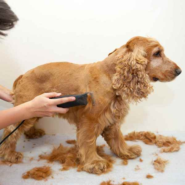 Picture for category Grooming