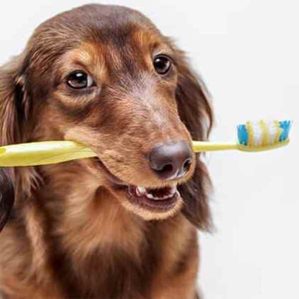 Picture for category Dog Oral Health