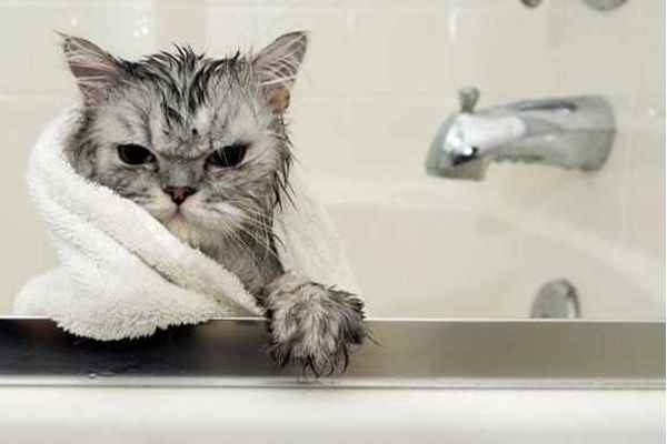 Picture for category Cat Grooming