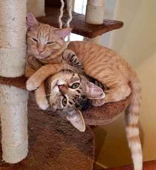 Picture for category Cat Furniture and Scratchers