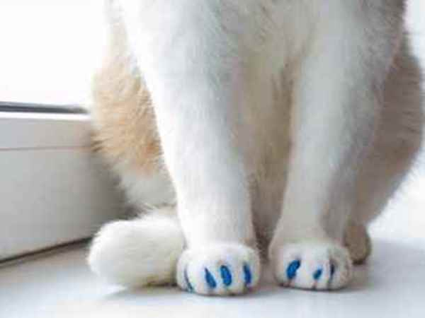 Picture for category Soft Paws