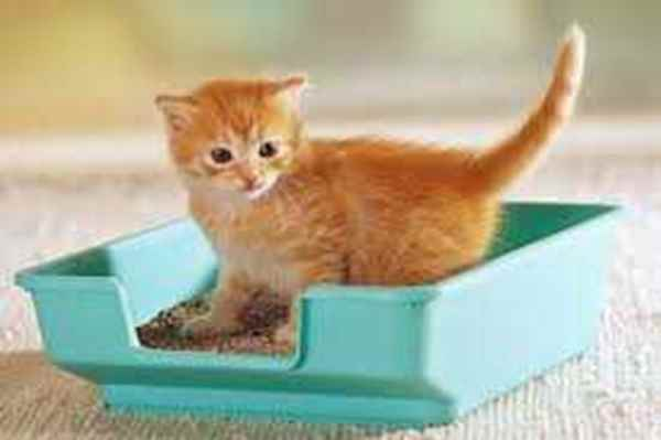 Picture for category Cat Litter & Accessories