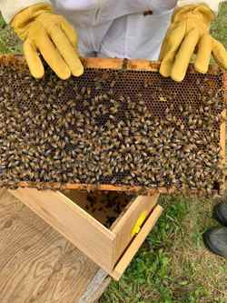 Picture for category Bee Keeping