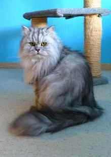 Picture for category Grooming Supplies