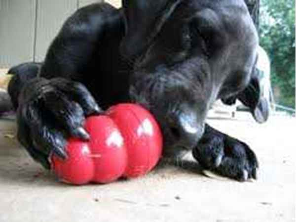 Picture for category Canine Kong