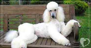 Picture for category Other Specialty Grooming