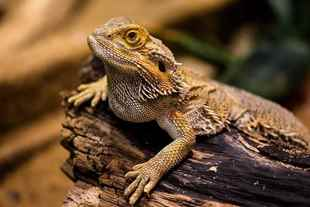 Picture for category Reptile & Fish Products