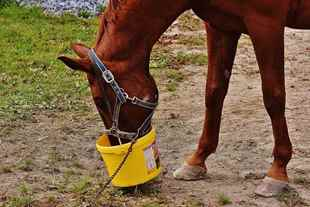 Picture for category Farm & Stable Equipment