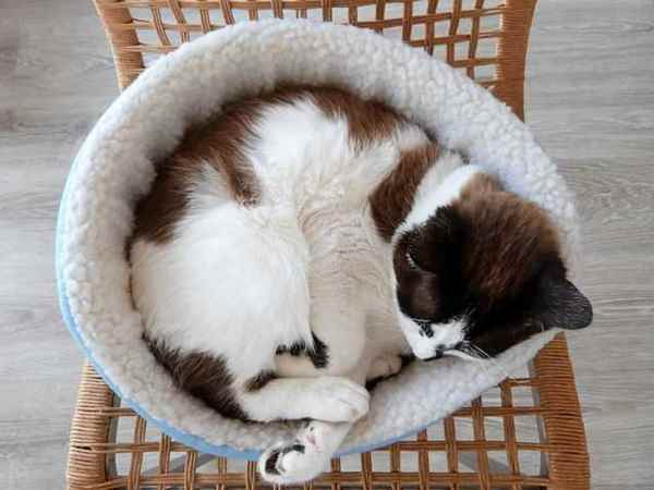 Picture for category Pet Beds