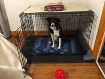 Picture for category Kennels & Pens