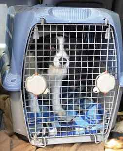 Picture for category Kennels & Pet Carriers