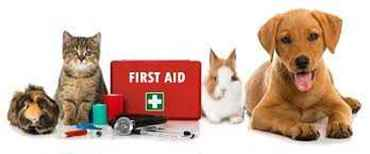 Picture for category First Aid Supplies