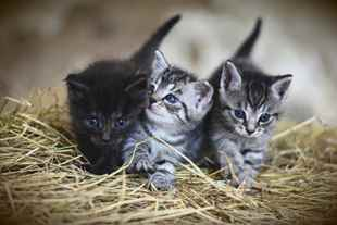 Picture for category Kitten Diets