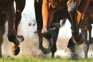 Picture for category Hoof Supplies