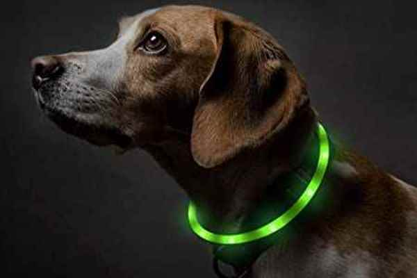 Picture for category Collar/Leash Accessories