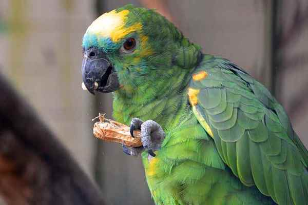 Picture for category Avian Diets