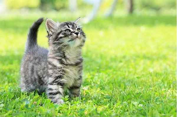 Picture for category Kitten