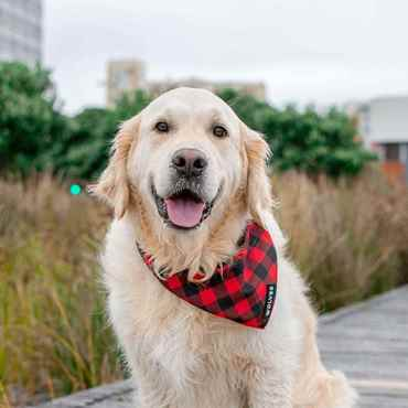 Picture for category Dog Bandanas, Fun wearables and Gear
