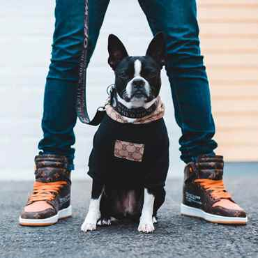 Picture for category Dog  Boots, Sweaters, Jackets