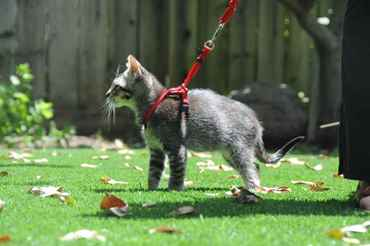 Picture for category Cat Harnesses and Leads