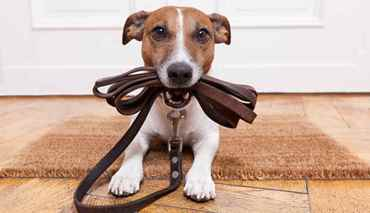 Picture for category Dog Leads