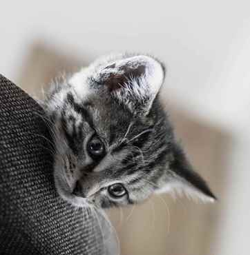 Picture for category Kitten/Growth