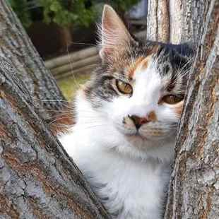 Picture for category Feline