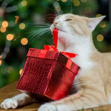Picture for category Cat Holiday Toys