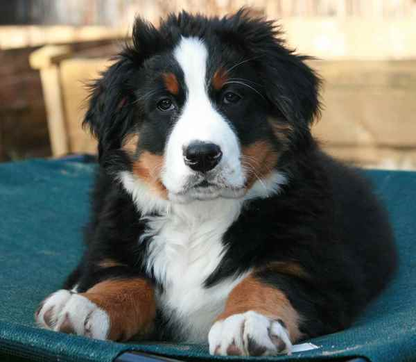Picture for category New Puppy