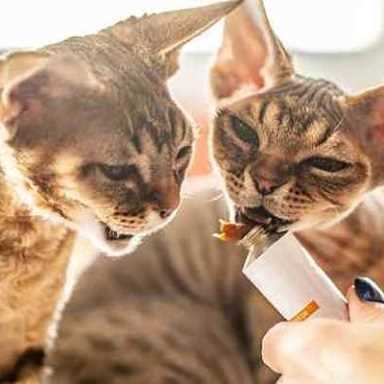 Picture for category Feline Dental Products