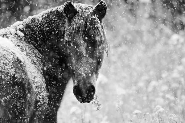 Picture for category Equine