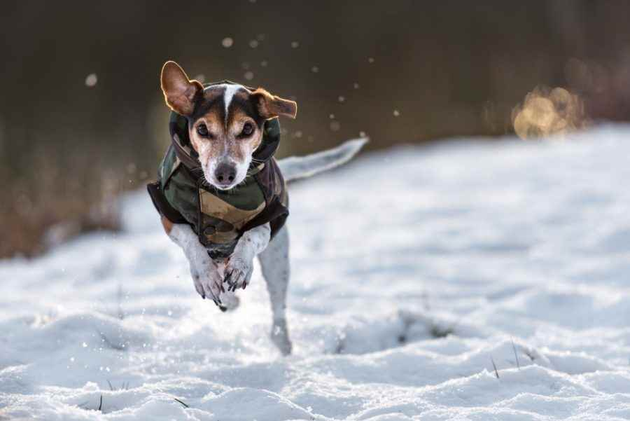 Picture for category Dog Outdoor Gear