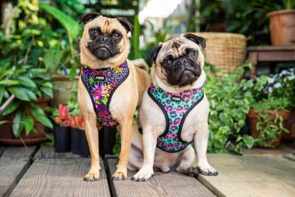 Picture for category Dog Harnesses