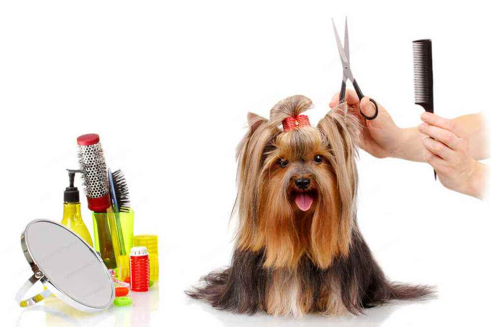 Picture for category Dog Grooming