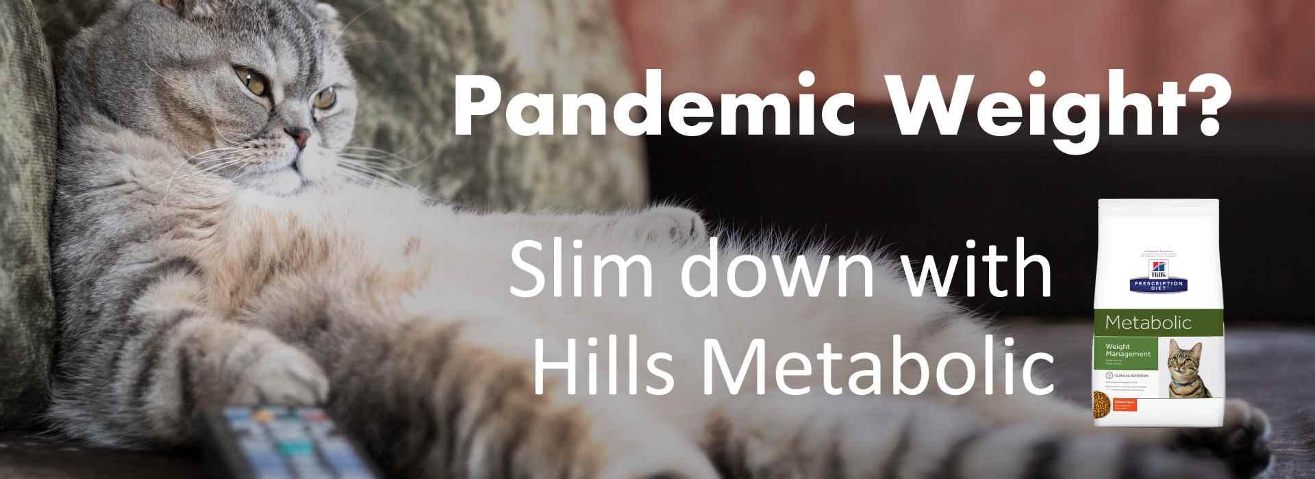 Feline Weight Management - Hills Metabolic