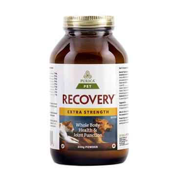 Picture of RECOVERY NUTRACEUTICAL XSTRENGTH CANINE/FELINE POWDER - 350gm