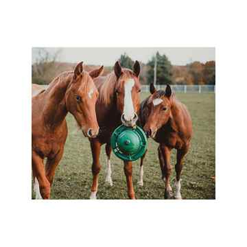 Picture of KONG EQUINE Classic Kong Hanging Set with Treat Ring Green
