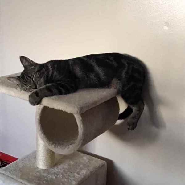 Picture for category Cat Furniture & Scratching Posts